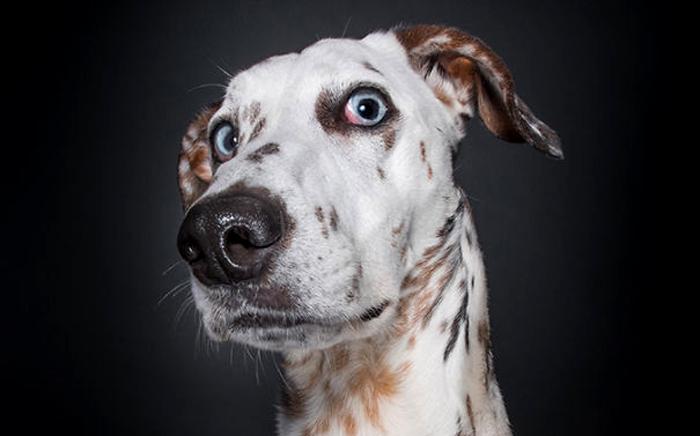 Эмоциональные собаки от Elke Vogelsang.