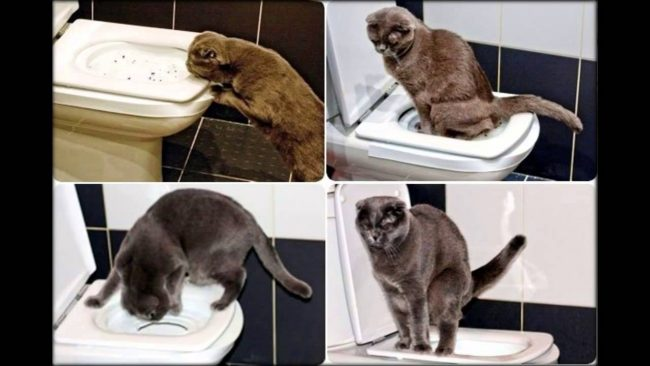 Как отучить кошку гадить в неположенном месте