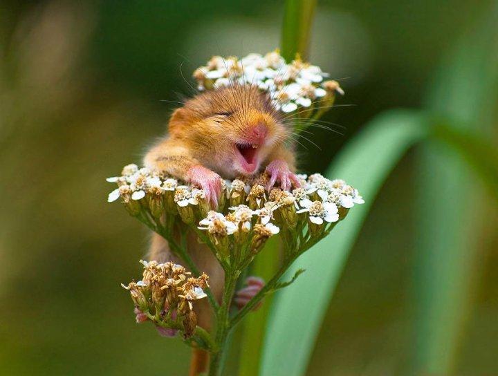 фотографии крошечных и забавных диких мышек