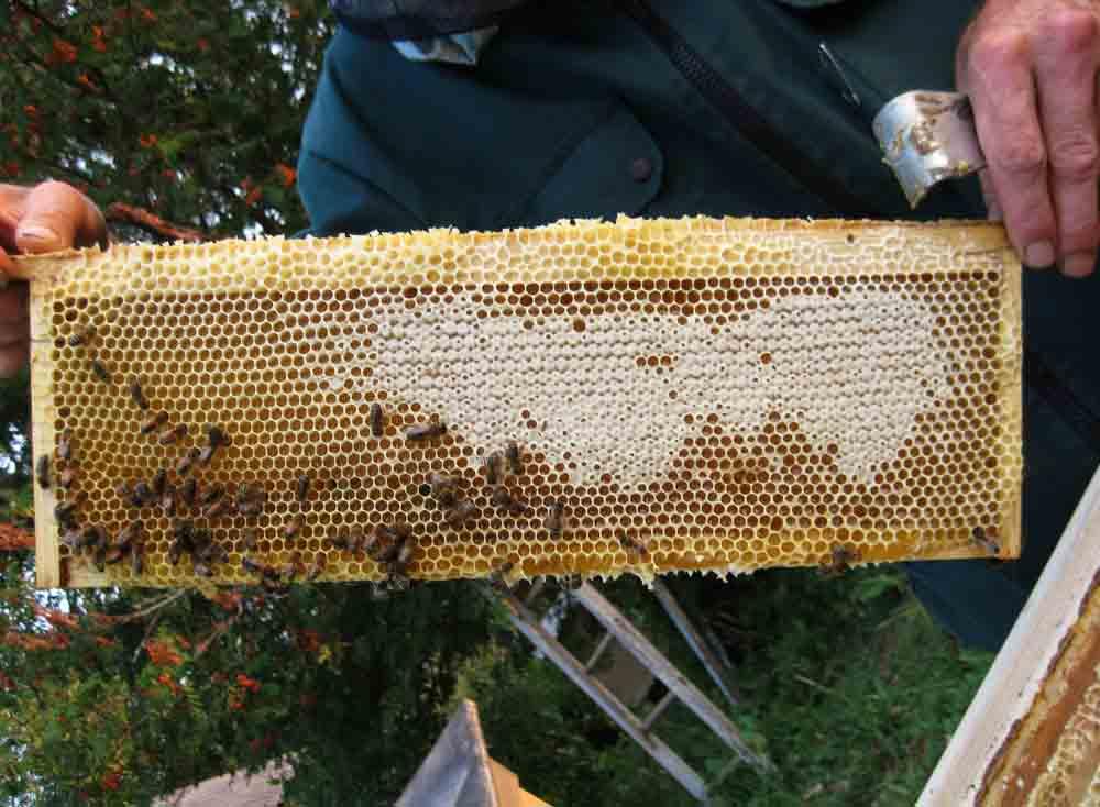 Отбор медовых рамок на пасеке пчеловодом