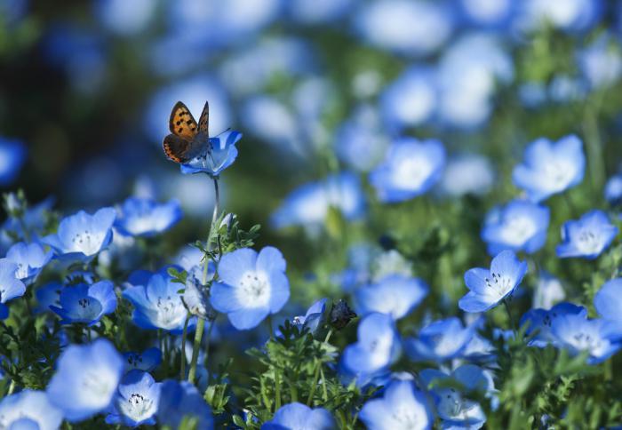 Голубоглазая красотка из Калифорнии