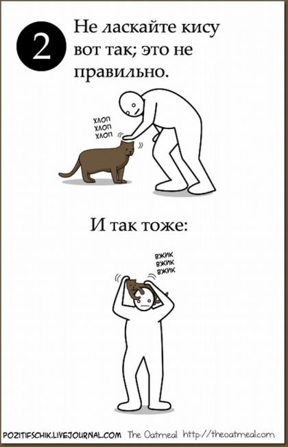 Как приласкать кошку