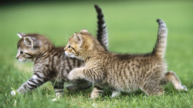 Клички для котов мальчиков