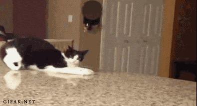 кошки, мы просто, обезьяны