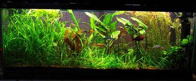 оформление аквариума в псевдонатуральном