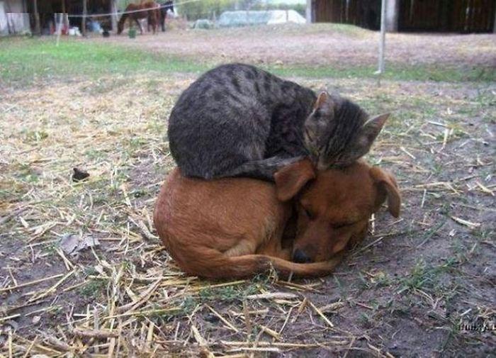 Спят усталые зверушки