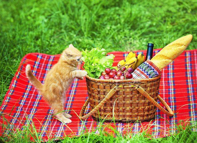 Должно же быть в этой корзине что-то съедобное, ну хотя бы колбаска!