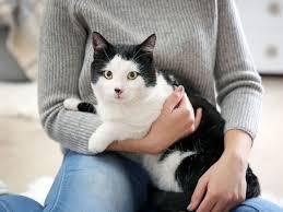 Операция - сильный стресс для животного