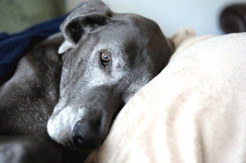 Заблуждения о собаках, в которые мы все верим