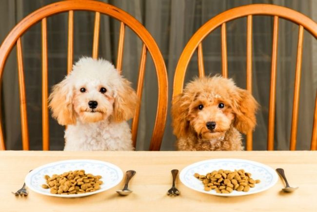 Наши домашние питомцы очень любят вкусно покушать. Хорошему хозяину нужно знать рейтинг сухих кормов для собак, чтобы не ошибиться с выбором