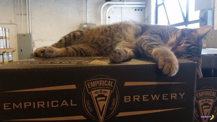 Пивоварня наняла котов-убийц