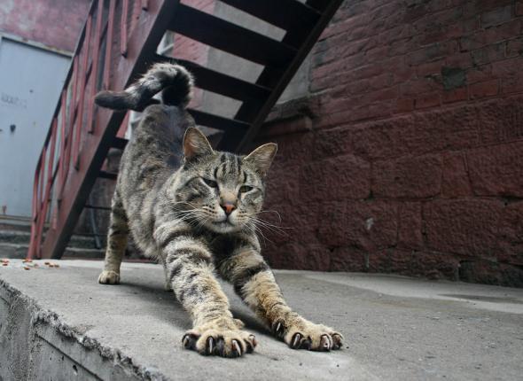 Для кошки мы просто обезьяны кошки, мы просто, обезьяны