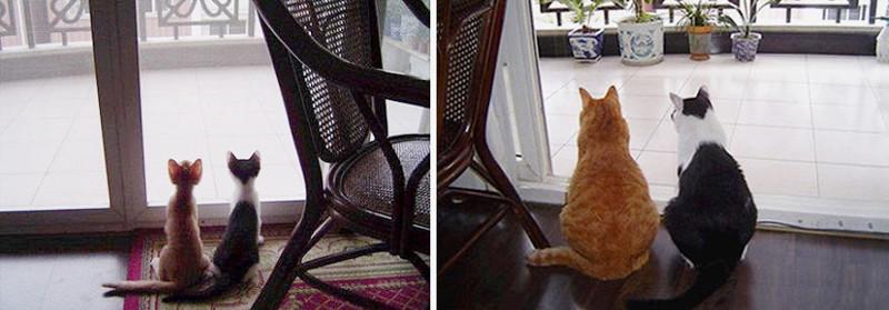 До и после  животные, кошки