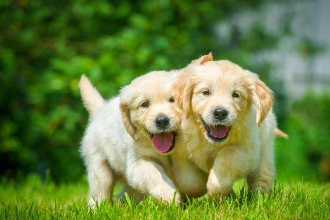 Во многом будущий характер собаки зависит от выбранной вами клички. Ведь известно, как корабль назовешь...