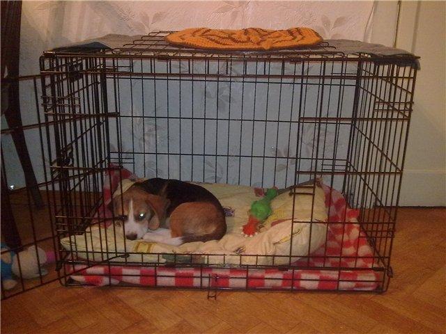 Картинки по запросу Как приучить щенка к домашней клетке для собак?