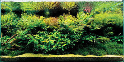 пейзаж природного аквариума