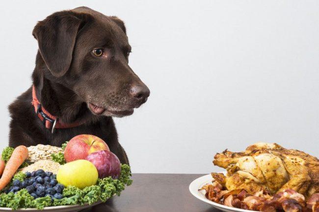 Еще несколько дней после поноса меню собаки должно быть диетическим