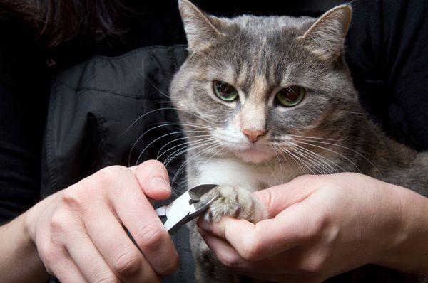 Почему кошка дерет дерево или мебель? кошки, когти, точит, дерет, интересно