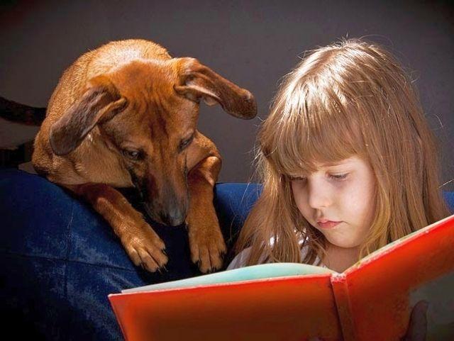 Скажи, что собака не будет отвлекать тебя от учебы, а наоборот - поможет сконцентрироваться на домашнем задании