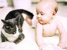 Опасны ли кошки для детей