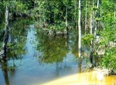 Керри населяет лесные участки медленно текущих притоков.