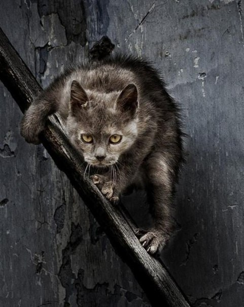 Милые коты, которых не гладили