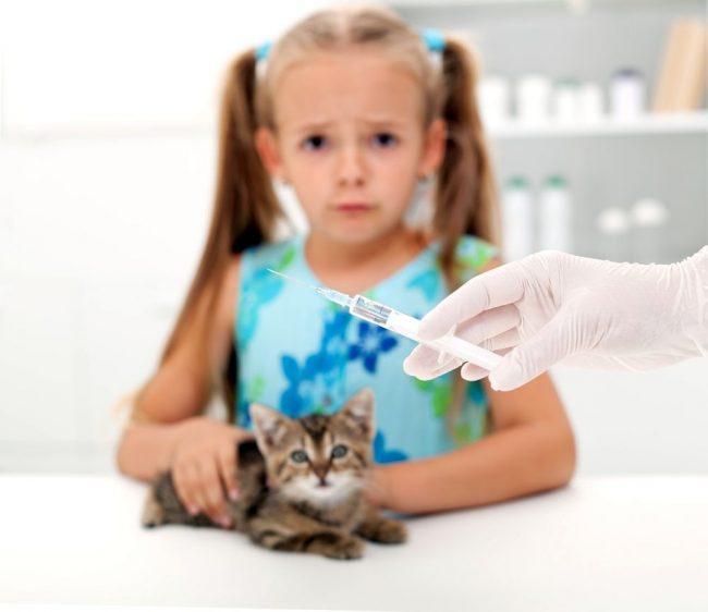 Несмотря на то, что некоторые советуют прививать котенка в домашних условиях, чтобы избежать страха и стрессовых состояний со стороны питомца, выбирать вакцину стоит вместе с ветеринаром