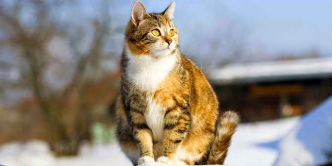 """Иногда беременной кошке хочется пойти погулять """"налево"""""""