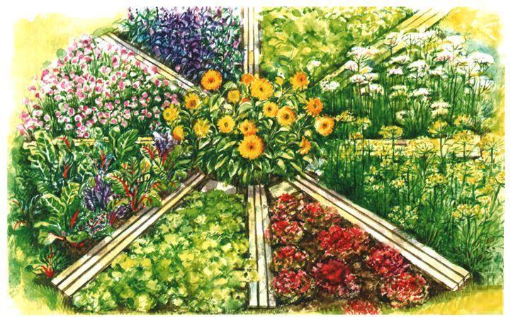 vegetables-in-planting-04