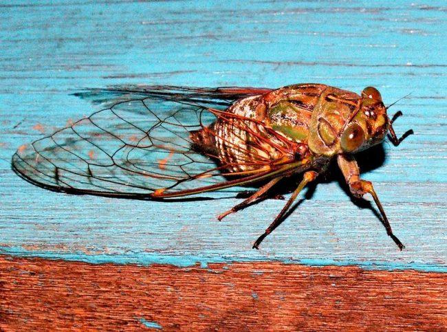 С пением цикад всегда ассоциируется отдых на южном побережье