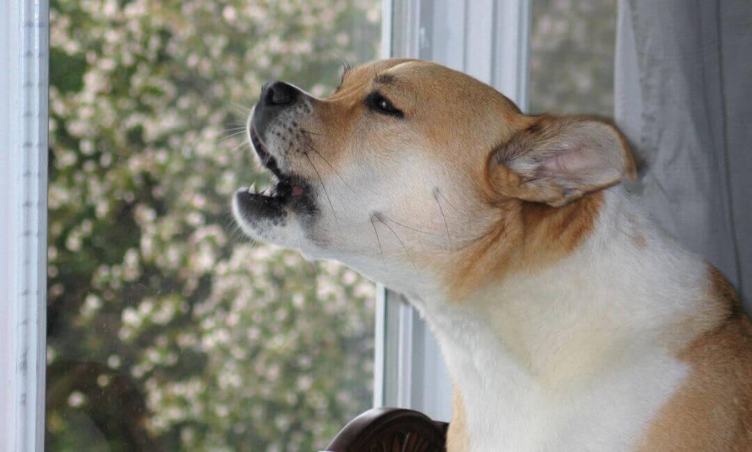 Картинки по запросу Как отучить собаку беспричинно лаять