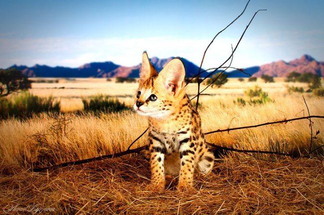 Я вырасту настоящим красавцем и прирожденным охотником
