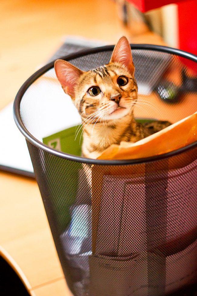 """""""Опять меня """"удалили в корзину""""! А я, между прочим, вам мышку поймал на столе, большую и с длинным хвостом"""""""