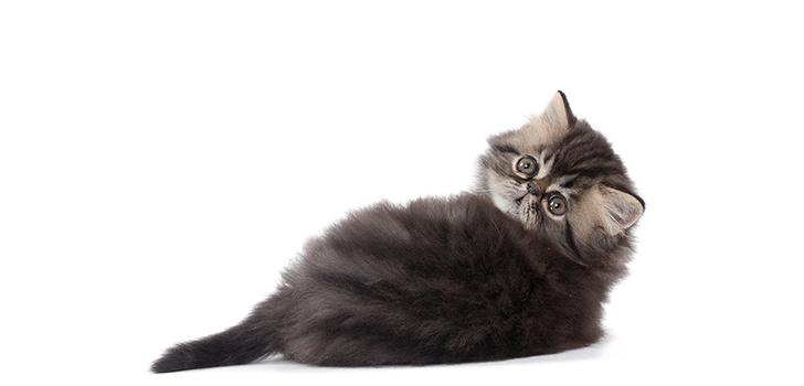 Чем кормить котенка возрастом 1 месяц