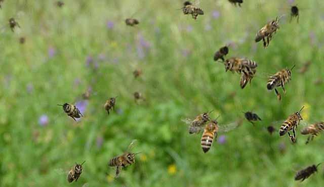 Осенью пчелы покидают улей