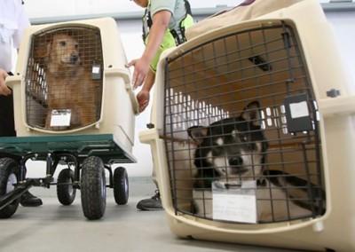 Картинки по запросу Как перевозить собаку в самолете