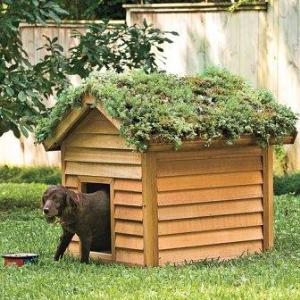 Будка для собаки – комфортная обитель