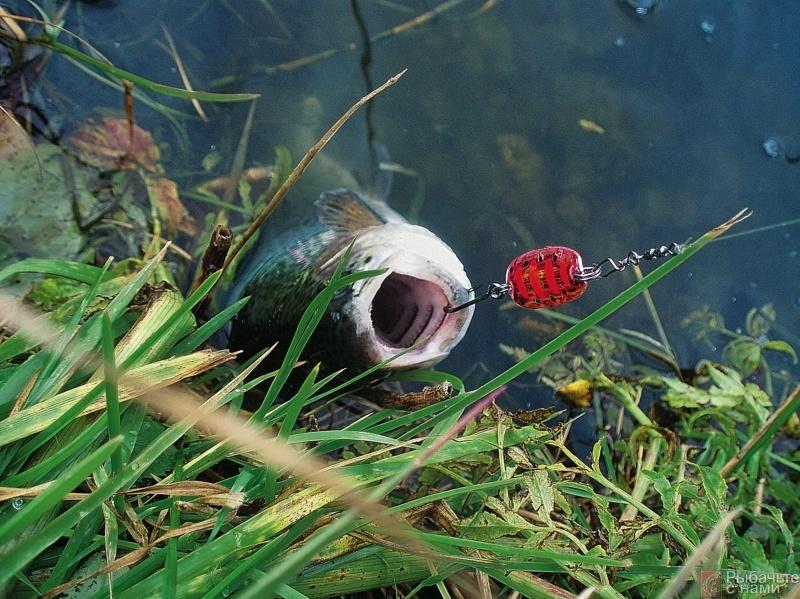 рыбалка на ультралайт хищника