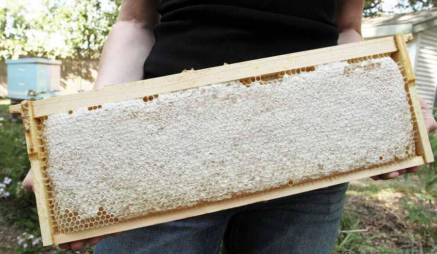 Мед целебный в сотовой рамке