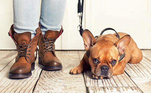 Собака с самых первых дней должна понимать, что ей можно делать, а что нет