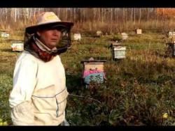 осеннее лечение пчел