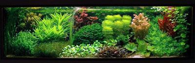 Аквариум с растениями в голландском стиле