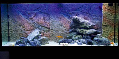 оформленный аквариум для цихлид танганьики