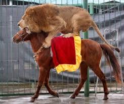 Видео - Дрессированные животные в зоопарке. Часть вторая